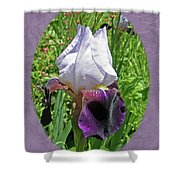 Bearded Iris Blossom Shower Curtain