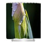 Bearded Iris Bud Shower Curtain