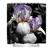 Bearded Irises Partial Color Shower Curtain