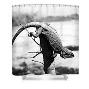 Bearded Lizard Shower Curtain