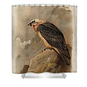Bearded Vulture By Thorburn Shower Curtain