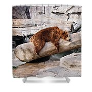 Bearly Relaxing Shower Curtain