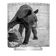 Bear's Log Stash Of Treats - Black And White Shower Curtain