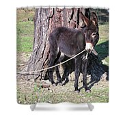 Beast Of Burden Shower Curtain