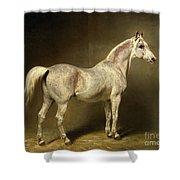 Beatrice Shower Curtain
