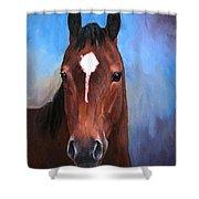 Beau  Quarter Horse Portrait Shower Curtain
