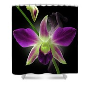 Beauties Shower Curtain