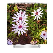 Beautiful African White Daisies Shower Curtain