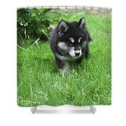 Beautiful Alusky Puppy Dog Walking Through Thick Green Grass Shower Curtain
