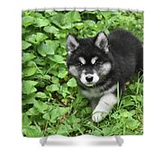 Beautiful Alusky Puppy Peaking Out Of Green Foliage Shower Curtain