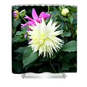 Beautiful And Fresh Dahlias In The Butchrt  Gardens,vancouver Island 2. Shower Curtain