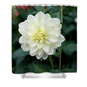 Beautiful And Fresh Dahlias In The Butchrt  Gardens,vancouver Island 3. Shower Curtain