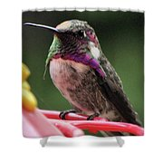 Beautiful Anna's Hummingbird On Perch Shower Curtain