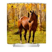 Beautiful Autumn Horse Shower Curtain