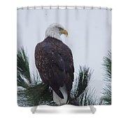 Beautiful Bald Eagle Shower Curtain
