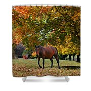 Beautiful Bay Horse In Fall Shower Curtain