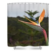 Beautiful Bird Of Paradise Flower In A Tropical Garden  Shower Curtain