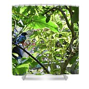 Beautiful Bird Perched In A Tree Shower Curtain