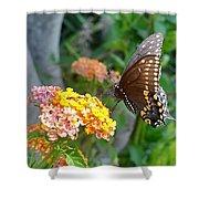 Beautiful Black Swallowtail Butterfly Shower Curtain