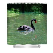 Beautiful Black Swan  Shower Curtain
