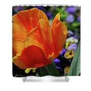 Beautiful Blooming Orange And Red Tulip Flower Blossom Shower Curtain