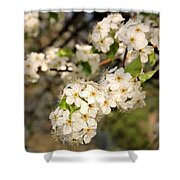 Beautiful Blooms 2 Shower Curtain