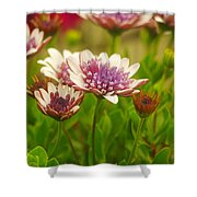 Beautiful Boquet Shower Curtain