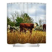 Beautiful Bovine 1 Shower Curtain