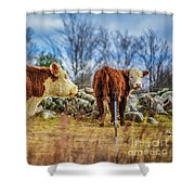 Beautiful Bovine With Side Eye Shower Curtain