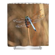 Beautiful Broken Wing Shower Curtain