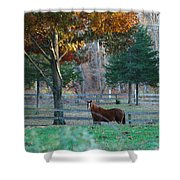 Beautiful Brown Horse Shower Curtain