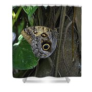 Beautiful Brown Morpho Butterfly In A Lush Garden  Shower Curtain