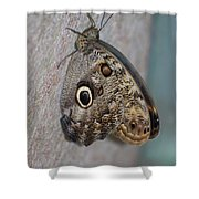 Beautiful Brown Morpho Butterfly Resting In A Butterfly Garden  Shower Curtain
