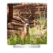 Beautiful Buck Deer In The Pike National Forest Shower Curtain