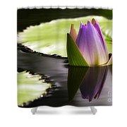 Beautiful Bud Reflection Shower Curtain