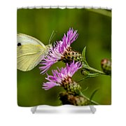 Beautiful Butterfly On Pink Thistle Shower Curtain