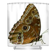 Beautiful Butterfly Wings Of Meadow Brown Isolated Shower Curtain