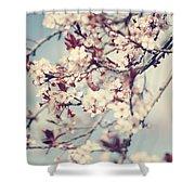 Beautiful Cherry Tree Blossom Shower Curtain