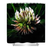 Beautiful Clover Blossom Shower Curtain
