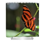 Beautiful Color Patterns To An Oak Tiger Butterfly  Shower Curtain
