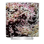 Beautiful Coral Reef  1 Shower Curtain