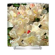 Beautiful Creamy White Pink Rhodies Floral Garden Baslee Troutman Shower Curtain