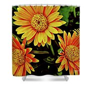 Beautiful Daisies Shower Curtain