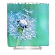 Beautiful Dandelion Shower Curtain