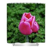 Beautiful Dark Pink Tulip Flower Blossom In A Garden Shower Curtain