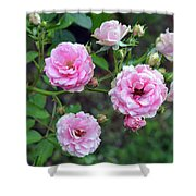 Beautiful Delicate Pink Roses On Green Leaves Background. Shower Curtain