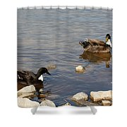 Beautiful Ducks Shower Curtain