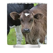 Beautiful Face Of A Brown Calf Shower Curtain