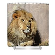 Beautiful Face Of A Lion In The Warm Sunshine Shower Curtain