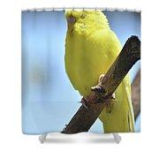 Beautiful Face Of A Yellow Budgie Bird Shower Curtain